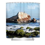 Bird Sentry Rock At Dana Point Harbor Shower Curtain by Elaine Plesser