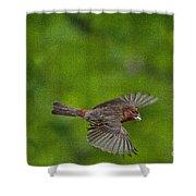 Bird Soaring With Food In Beak Shower Curtain by Dan Friend