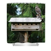 Birdhouse Takeover  Shower Curtain by Kym Backland