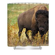 Bison Buffalo Shower Curtain by National Parks Service