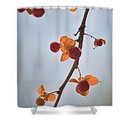 Bittersweet Vine Shower Curtain by Teresa Mucha