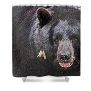 Black Bear Shower Curtain by Meg Rousher