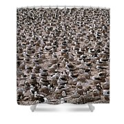 Black-browed Albatross Nesting Colony Shower Curtain by Art Wolfe