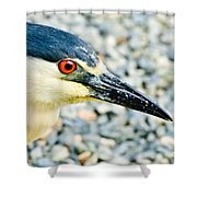 Black Crowned Night Heron 2 Shower Curtain by Bob and Nadine Johnston