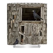 Black Crows At The Old Barn Shower Curtain by Edward Fielding