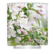 Blooming Apple Tree Shower Curtain by Elena Elisseeva