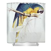 Blue And Yellow Macaw Shower Curtain by Edward Lear