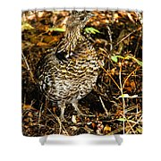 Blue Grouse Shower Curtain by Robert Bales