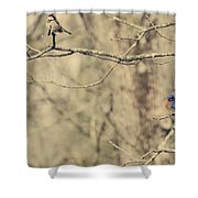 Bluebird And Sparrow Shower Curtain by Heather Applegate