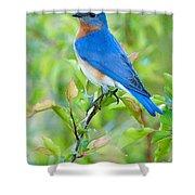 Bluebird Joy Shower Curtain by William Jobes