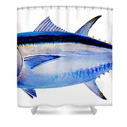 Bluefin tuna Shower Curtain by Carey Chen