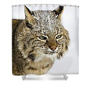 Bob Shower Curtain by Jack Milchanowski