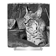 Bobcat Shower Curtain by Nikolyn McDonald