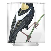 Bobolink Shower Curtain by Anonymous