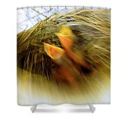 Born To Fly Shower Curtain by Robyn King