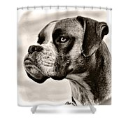 Boxer Profile Shower Curtain by Lana Trussell