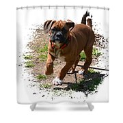 Boxer Puppy 14-1 Shower Curtain by Maria Urso