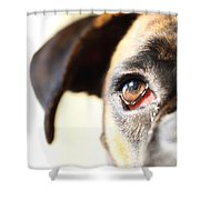 Boxer's Eye Shower Curtain by Jana Behr