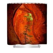 Boynton Canyon 04-343 Shower Curtain by Scott McAllister