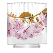 Branch With Cherry Blossoms Shower Curtain by Elena Elisseeva