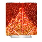 Bright And Dark Shower Curtain by Heiko Koehrer-Wagner
