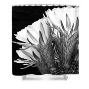 Brilliant Blossoms Diptych Left Shower Curtain by Kelley King