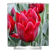Brilliant Red Tulips in the Garden Shower Curtain by Jennie Marie Schell