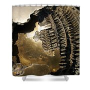 Bronze Abstract Shower Curtain by Stuart Litoff