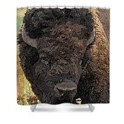Buffalo Head Shower Curtain by Sara  Raber
