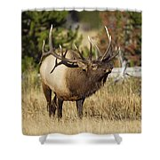 Bull Elk II Shower Curtain by Gary Langley