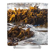 Bull Kelp Durvillaea Antarctica Blades In Surf Shower Curtain by Stephan Pietzko
