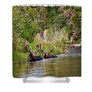 Bull Moose Summertime Spa Shower Curtain by Timothy Flanigan
