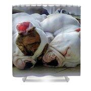 Bulldog Bliss Shower Curtain by Karen Wiles
