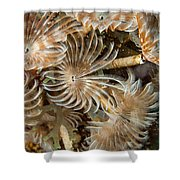 Bunch Of Dusters Shower Curtain by Jean Noren