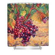 Bunch Of Grapes Shower Curtain by Carolyn Jarvis