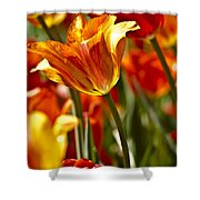 Tulips-flowers-tulips Burning Shower Curtain by Matthew Miller