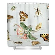 Butterflies Moths And Other Insects With A Sprig Of Apple Blossom Shower Curtain by Jan Van Kessel