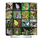 Butterflies Squares Collage Shower Curtain by Carol Groenen