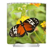 Butterfly Wings Shower Curtain by Anne Gilbert