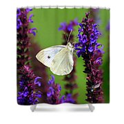 Cabbage White Butterfly Shower Curtain by Christina Rollo