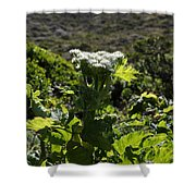 California Coast Hillside Flower 5d22613 Shower Curtain by Wingsdomain Art and Photography