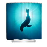 California Sea Lion  Channel Islands Np Shower Curtain by Flip Nicklin