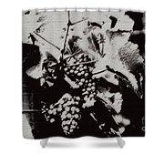 California Vineyard Shower Curtain by Linda Knorr Shafer