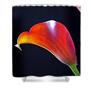 Calla Colors And Curves Shower Curtain by Rona Black