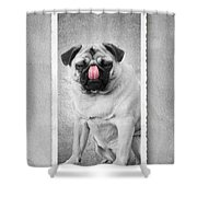 Can You Touch Your Nose With Your Tongue Shower Curtain by Edward Fielding