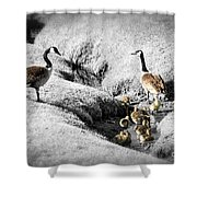 Canada geese family Shower Curtain by Elena Elisseeva