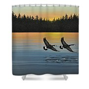 Canada Geese Shower Curtain by Kenneth M  Kirsch