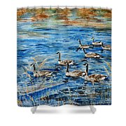 Canada Geese Shower Curtain by Zaira Dzhaubaeva