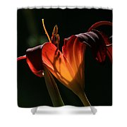 Candle In The Wind Shower Curtain by Donna Kennedy