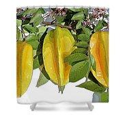 Carambolas Starfruit Three Up Shower Curtain by Olivia Novak